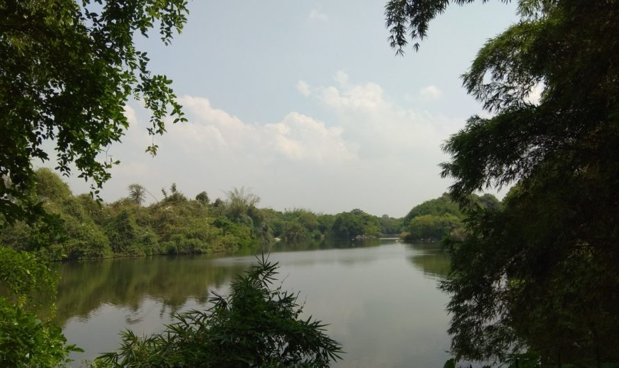Ranganthittu bird sanctuary and Mysore palace-A getaway from Bangalore- One day trip for mums and kids