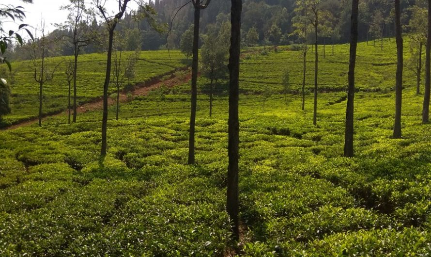 Why Coonoor makes for that perfect weekend destination?